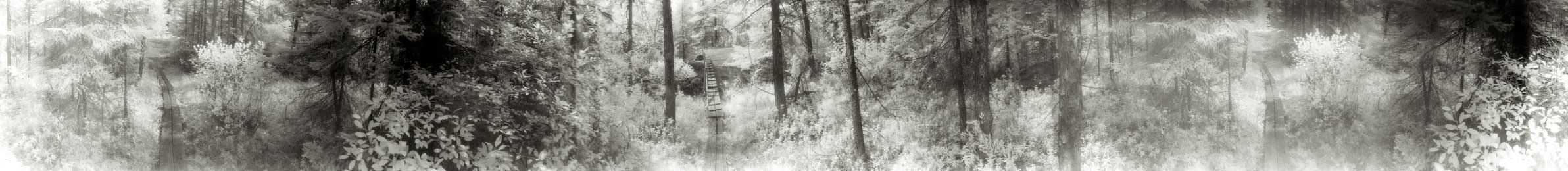 """""""Plank Trail"""" from the series Footprints, by William Mokrynski"""