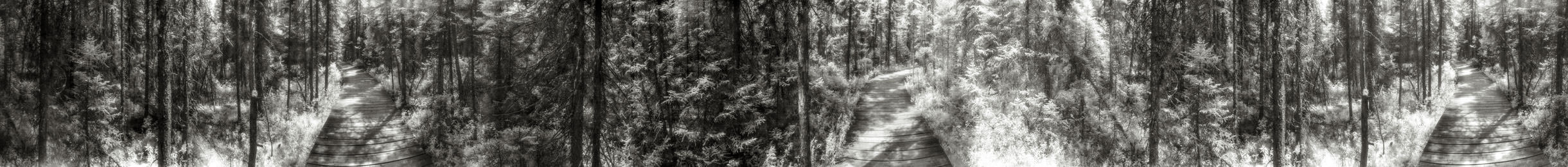 """Spruce Bog Trail 1"" from the series Footprints, by William Mokrynski"